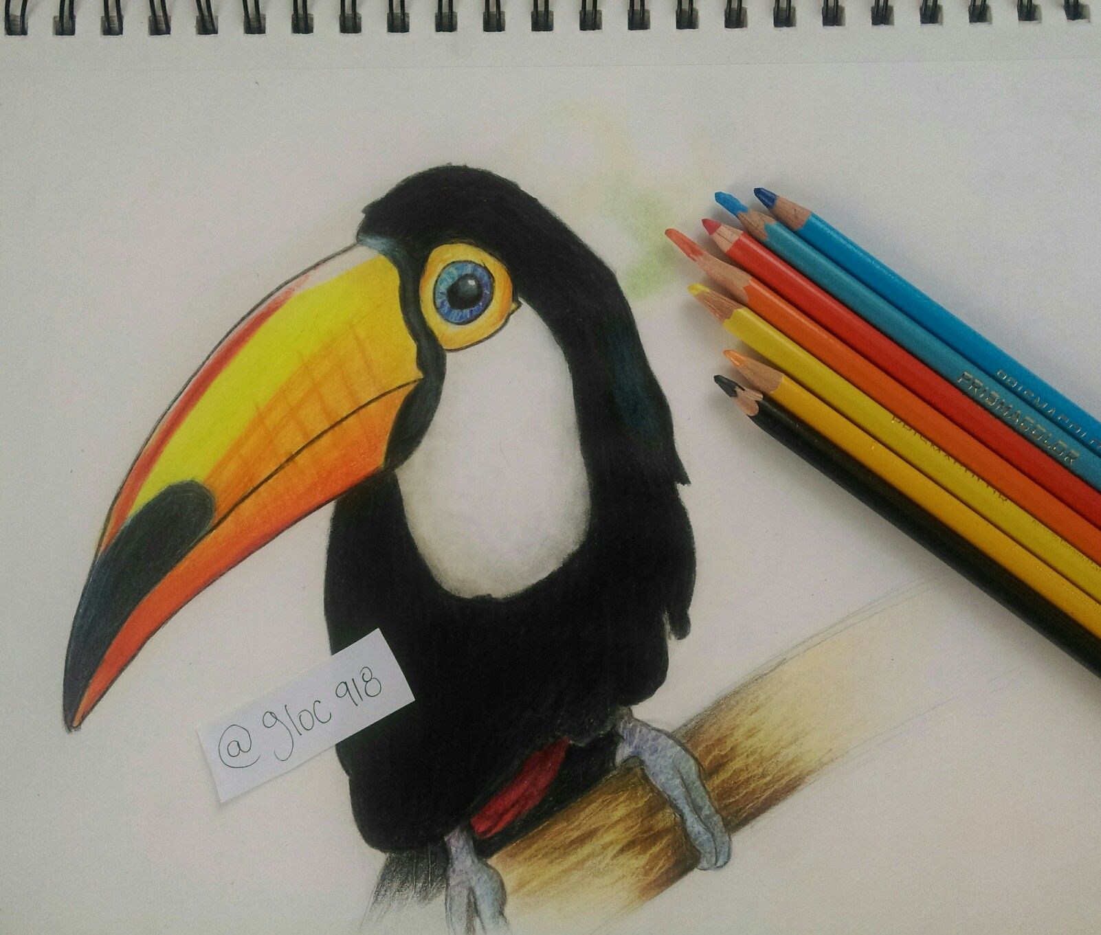 Tucán Dibujo a color | dibujo | Pinterest | Dibujo y Color