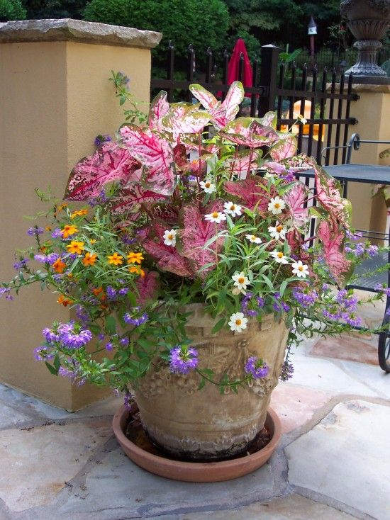 Large Container Planting Idea Love The Plant Combination And