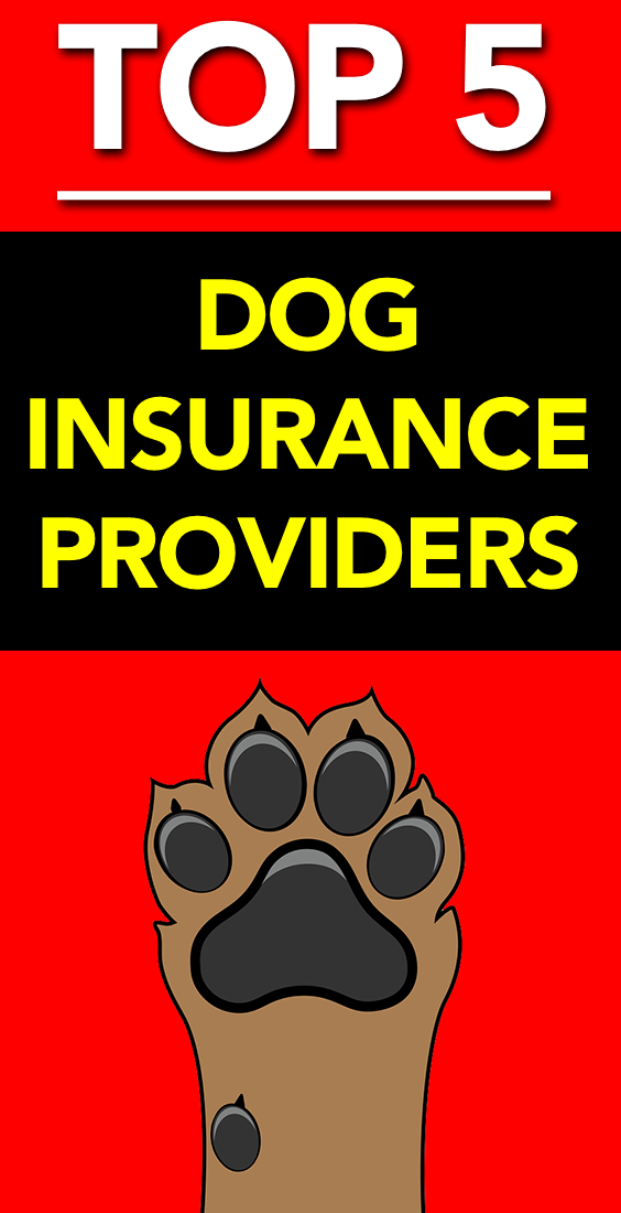 Top 5 Dog Insurance Providers With Images Dog Insurance Best