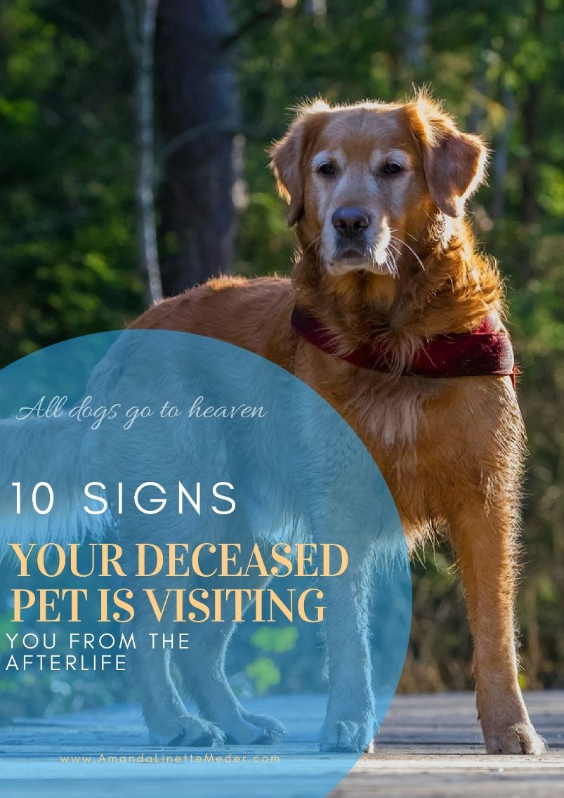 10 Signs Your Pet Is Visiting You From The Afterlife Pet