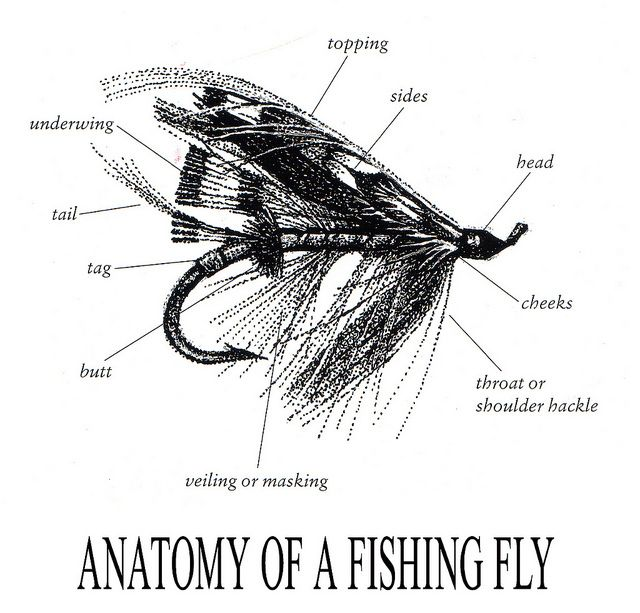 Anatomy Of A Fishing Fly Anatomy Fish And Fly Fishing