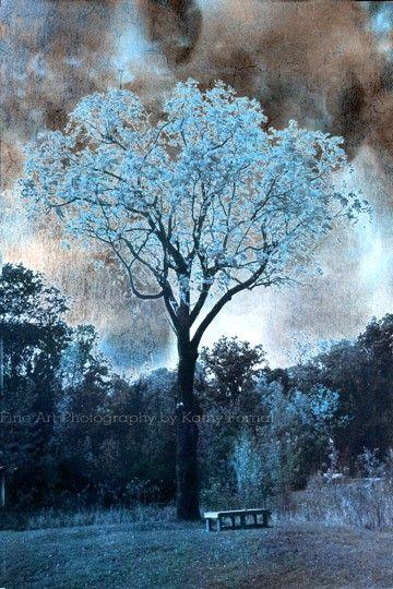 Nature Photography Dreamy Blue Trees Surreal Blue Fantasy Nature Landscape Nature Fine Art T Nature Photography Nature Photography Flowers Beautiful Nature