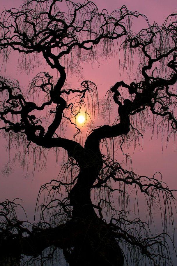 black tree, mauve sky