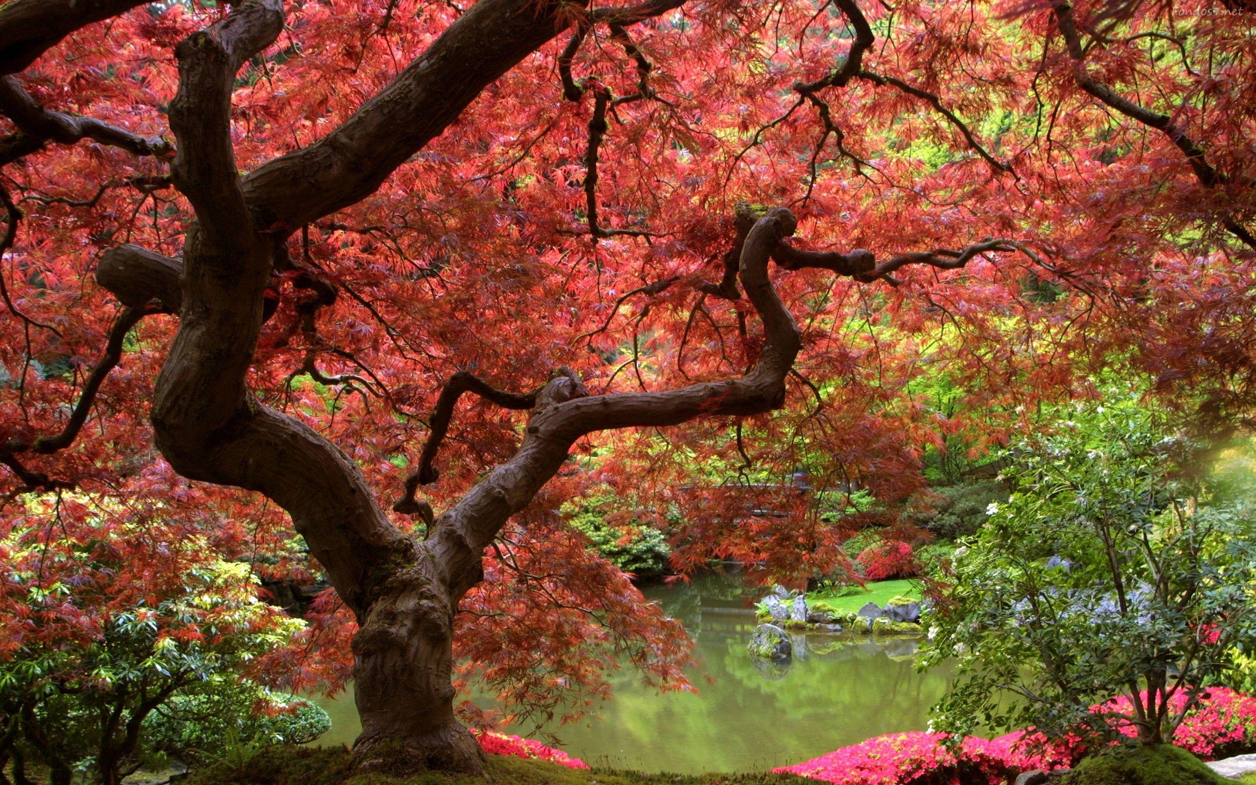 Paisajes otonales hd colores de oto o pinterest for Jardines orientales fotos