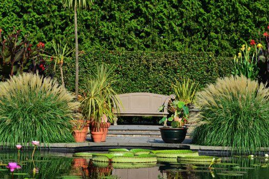 Aquatic Garden - The Gardens at Wave Hill    Wave Hill - New York ...