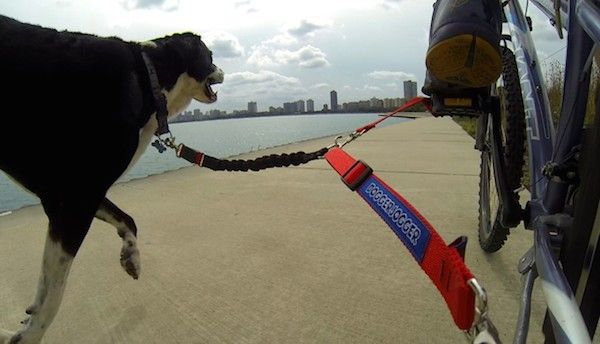 Friday Freebie Win A Doggerjogger Bike Dog Leash And Bike With