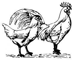 free printable chicken baby chick and rooster coloring pages for kids i have chicken clip art as well