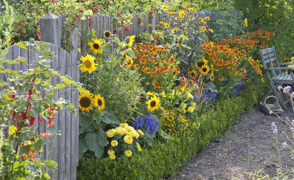 Die wichtigsten Pflanzen für den Bauerngarten #cottagegardens