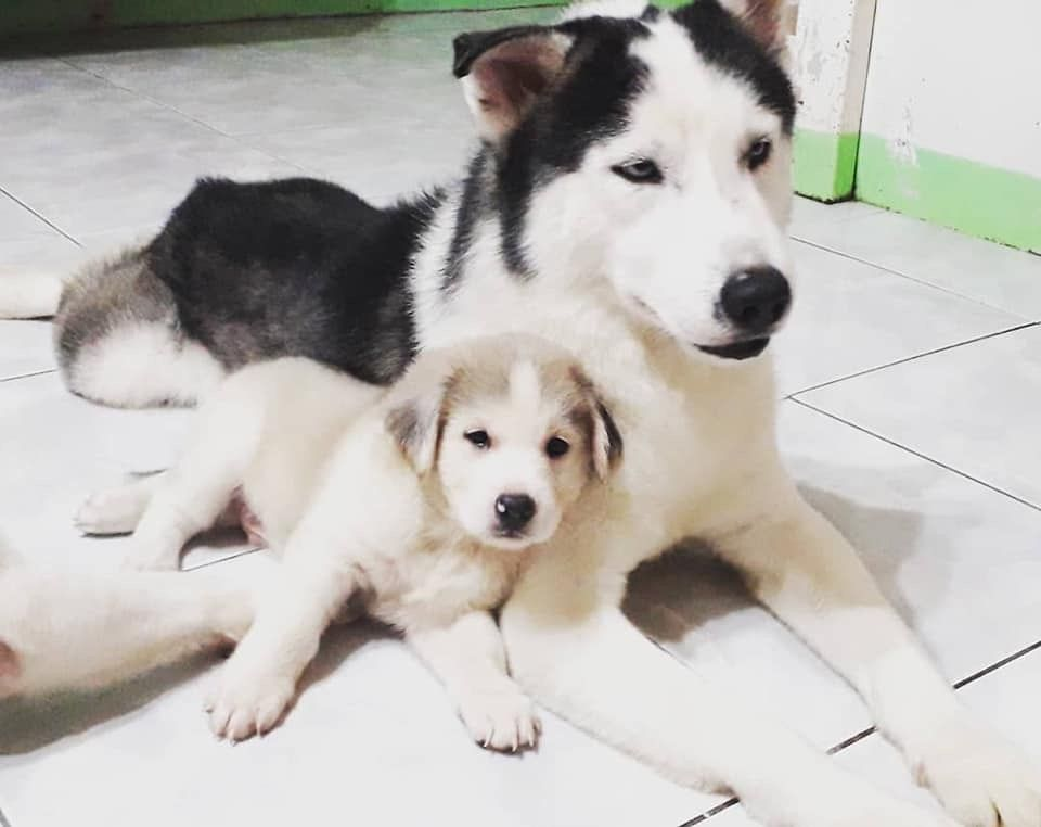 Father And Son Both Have Floppy Ears Husky Huskies Funny
