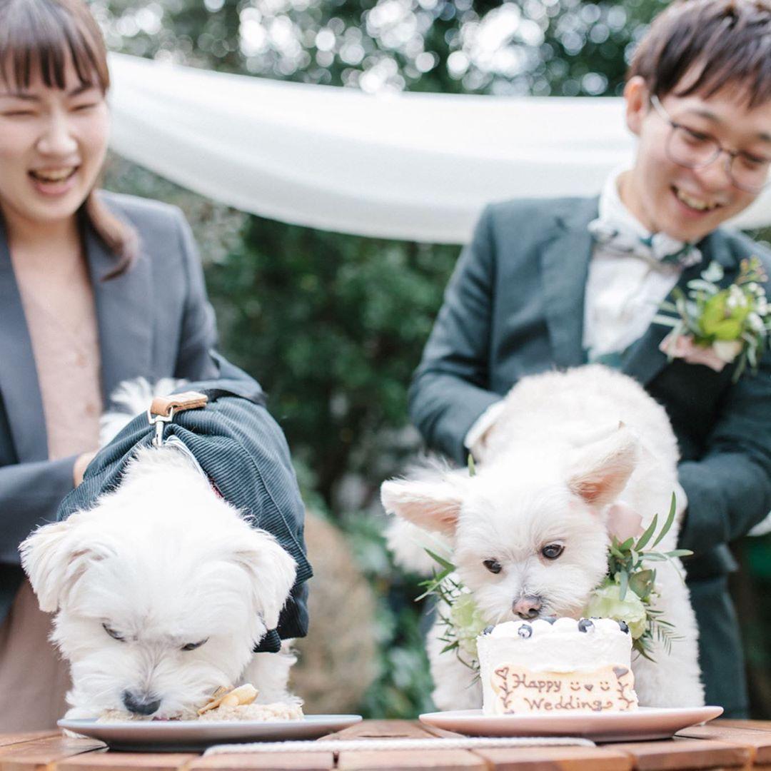 リングドックだけじゃない ペット参加型の結婚式演出11選 結婚式準備はウェディングニュース ペット 結婚式 準備 ウェディング