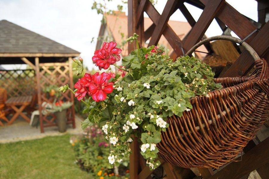 Kwiaty W Donice Na Taras I Balkon Plants