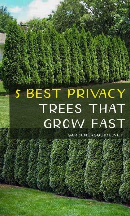 Best Privacy Trees That Grow Fast5 Best Privacy Trees That Grow Fast Free your hands from washing and squeezing your mops over and over againIt can improve your work effi...
