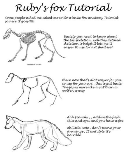 Fox Drawing Reference Guide | Drawing References and Resources | Scoop.it