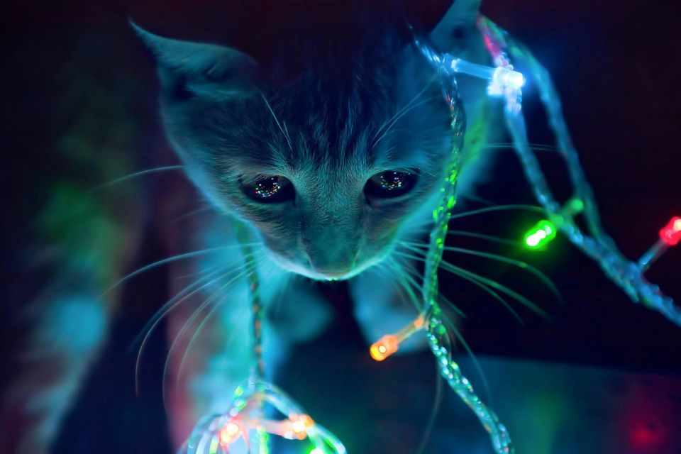 3d Animated Cat In Winter Christmas Lights Hd Background Christmas Lights Wallpaper Christmas Cats Cat Wallpaper Cats