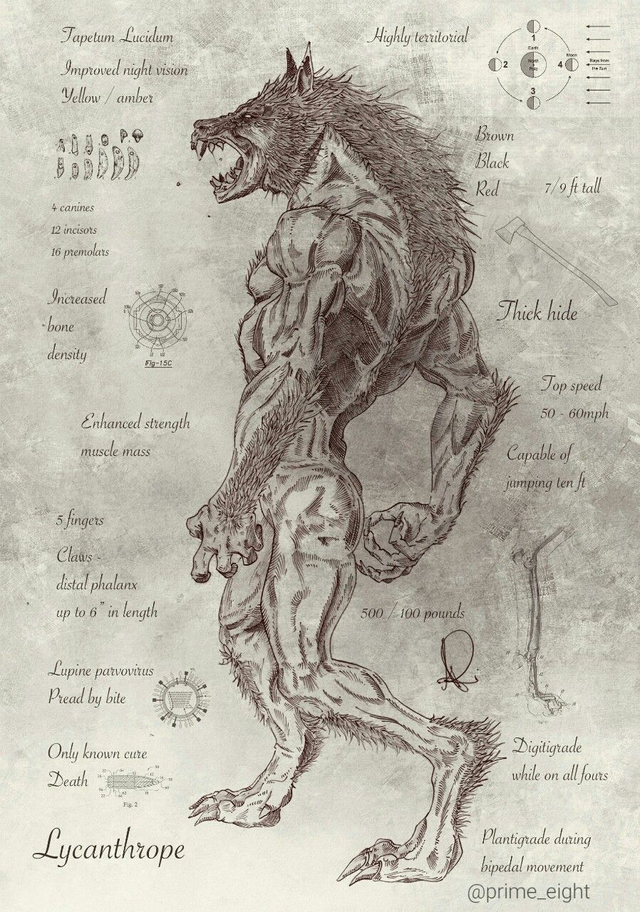 lycanthrope tumblr the werewolf legend pinterest