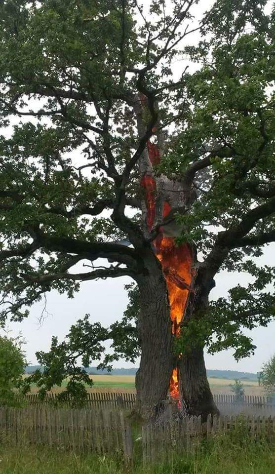 An old tree burning from inside after lightning struck it #tree ...