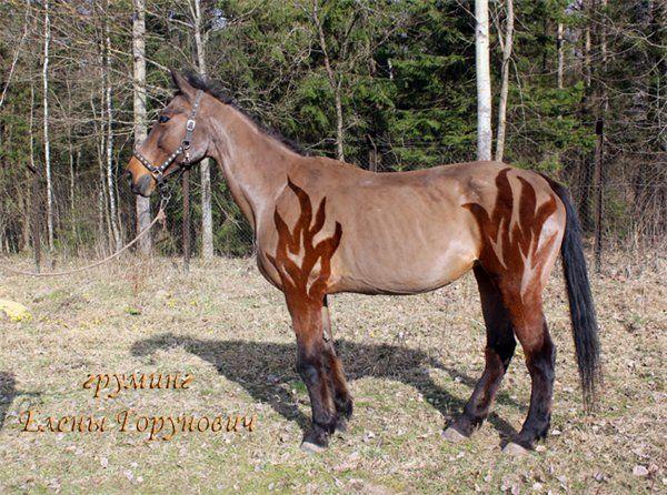 clip clipping horses pferdefreunde horses our friends pinterest pferde reiten und pferd scheren - Pferd Scheren Muster