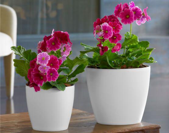 crescent garden planters. Eva Planters | Crescent Garden-Indoor And Outdoor Garden