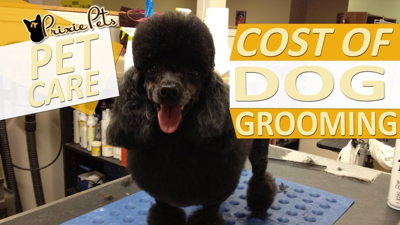 Dog grooming services can be expensive heres what goes