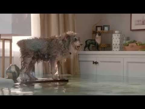Nacho The Flooded House Dog Diving Competition Youtube Dog