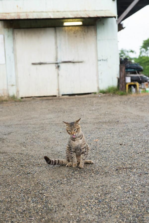 #neko #cat  (via keitaney)