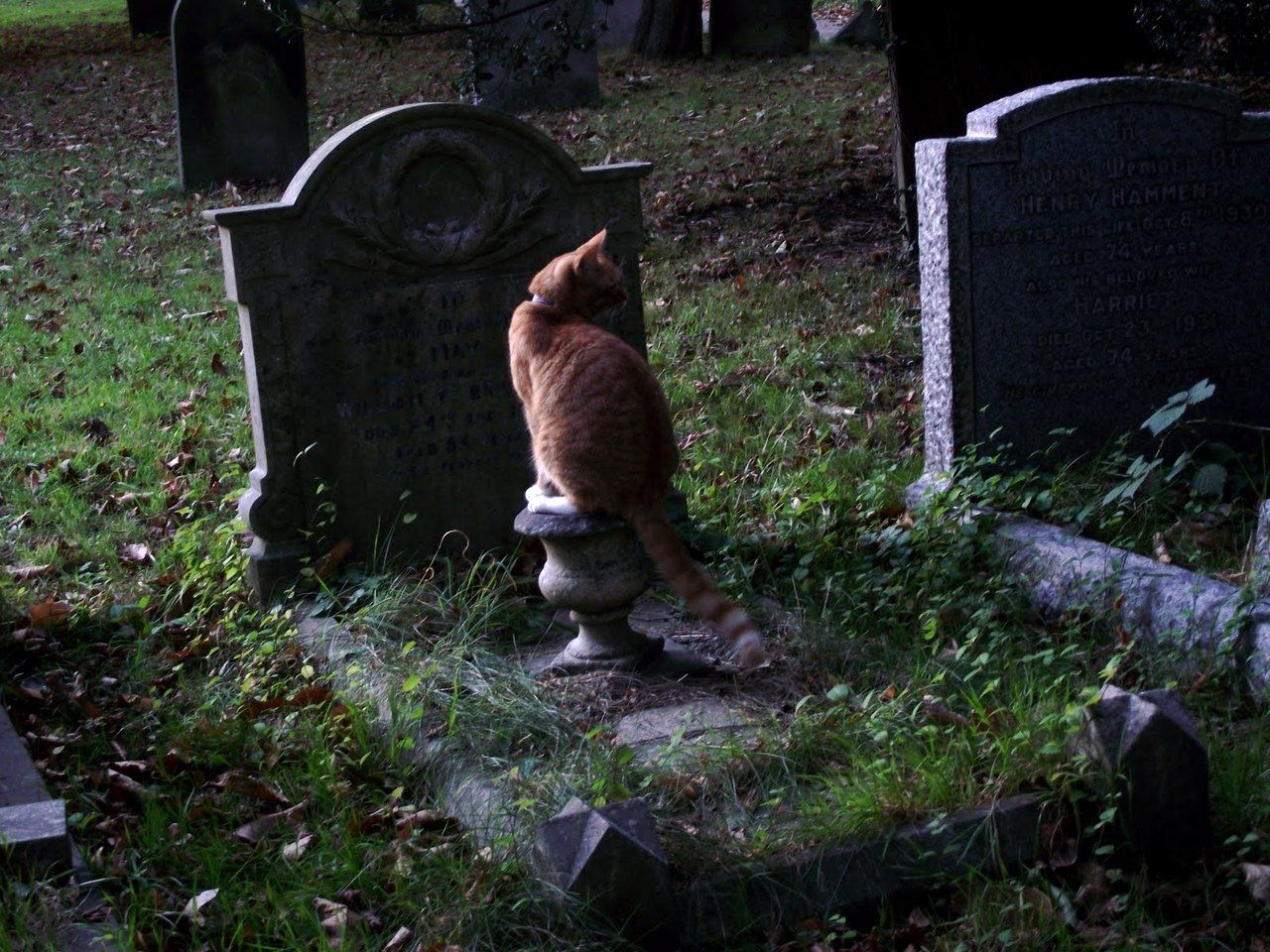 Malformalady A Cat Sitting On A Grave In Earlham Cemetery Norwich Pet Cemetery Cat Sitting Cemetery
