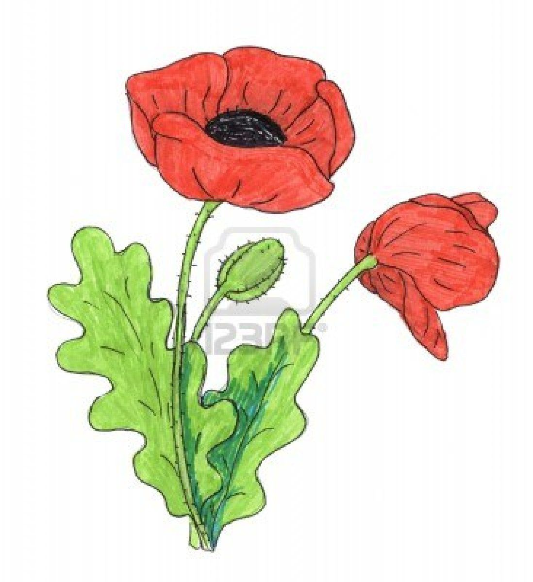 Poppy Flower Drawing Flower Drawing Poppy Flower Drawing Poppy Drawing