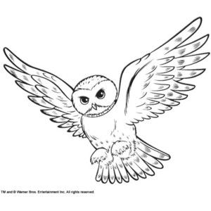 Coloring Snowy Owl Hedwig Picture Owl Coloring Pages Owls Drawing Harry Potter Drawings Easy