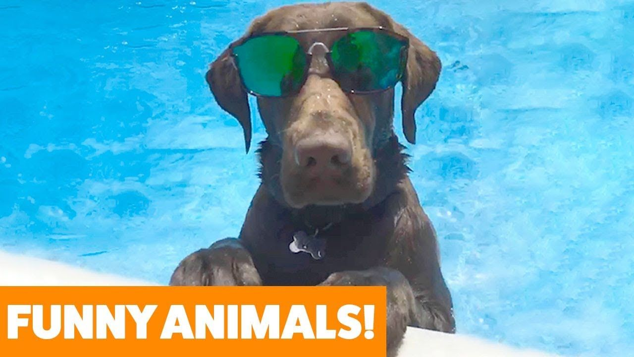 Download Social Video Instantly Funny Animal Videos Funny Animals Animal Gifs