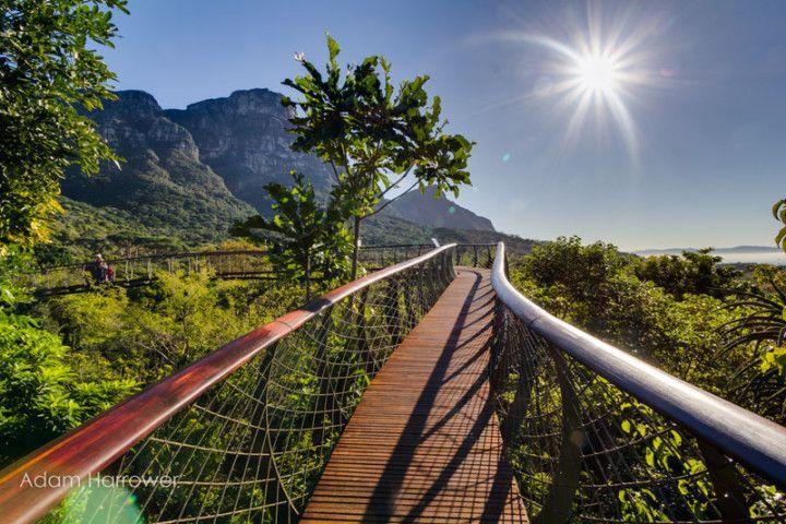 The fantastic hanging bridges of park Kirstenbosch