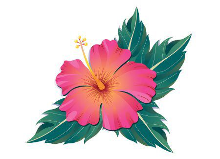Hibiscus Flower Flor Amapola Flower Drawing Pink Tattoo