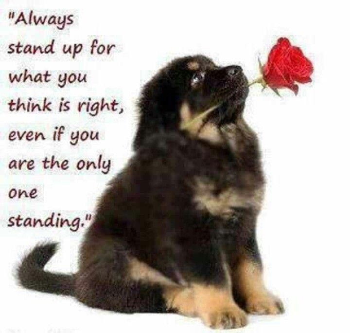 Always stand up for what you think is right
