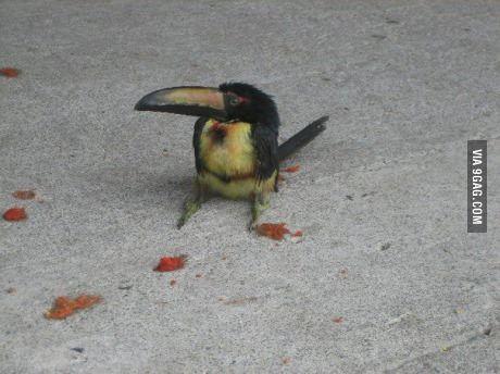 Baby toucan - http://geekstumbles.com/funny/baby-toucan/