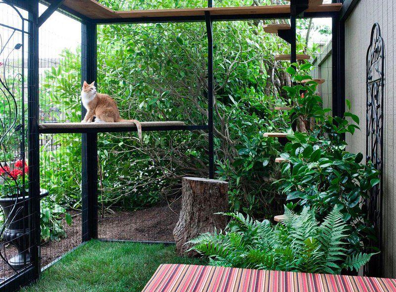 A n no conoces los 39 gatios 39 patios de gato decocasa for Como ahuyentar gatos del jardin