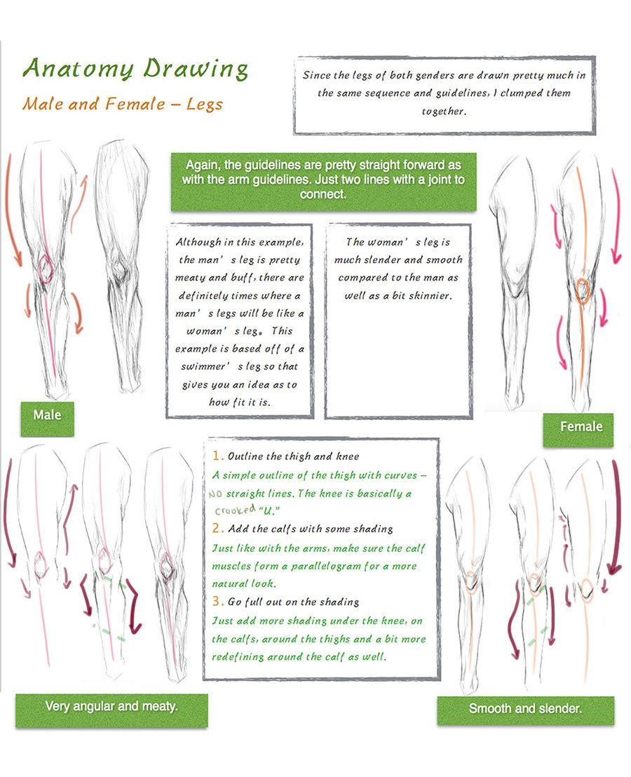 Male And Female Leg Drawing Tutorial By Shironemai Differences