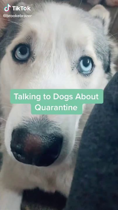 Dog's response to quarantine ending