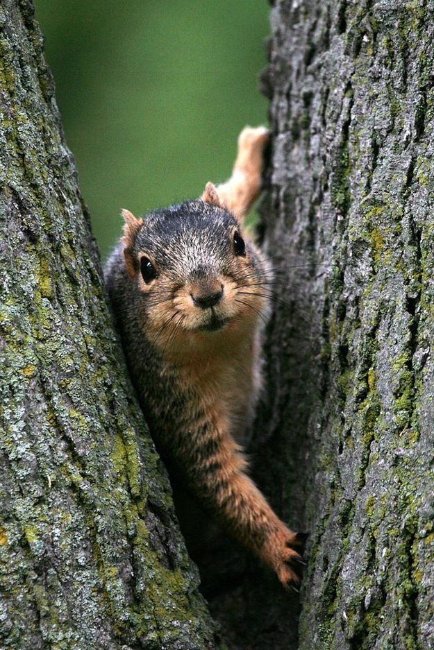 25 Photos Of The Ever Underrated And Adorable Squirrel Animals Beautiful Animals Cute Animals