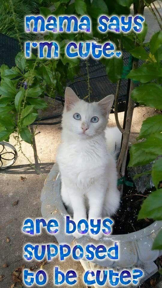 Boothedeafkitty Fun Cute Cat Kitten Meme Funny Kittens