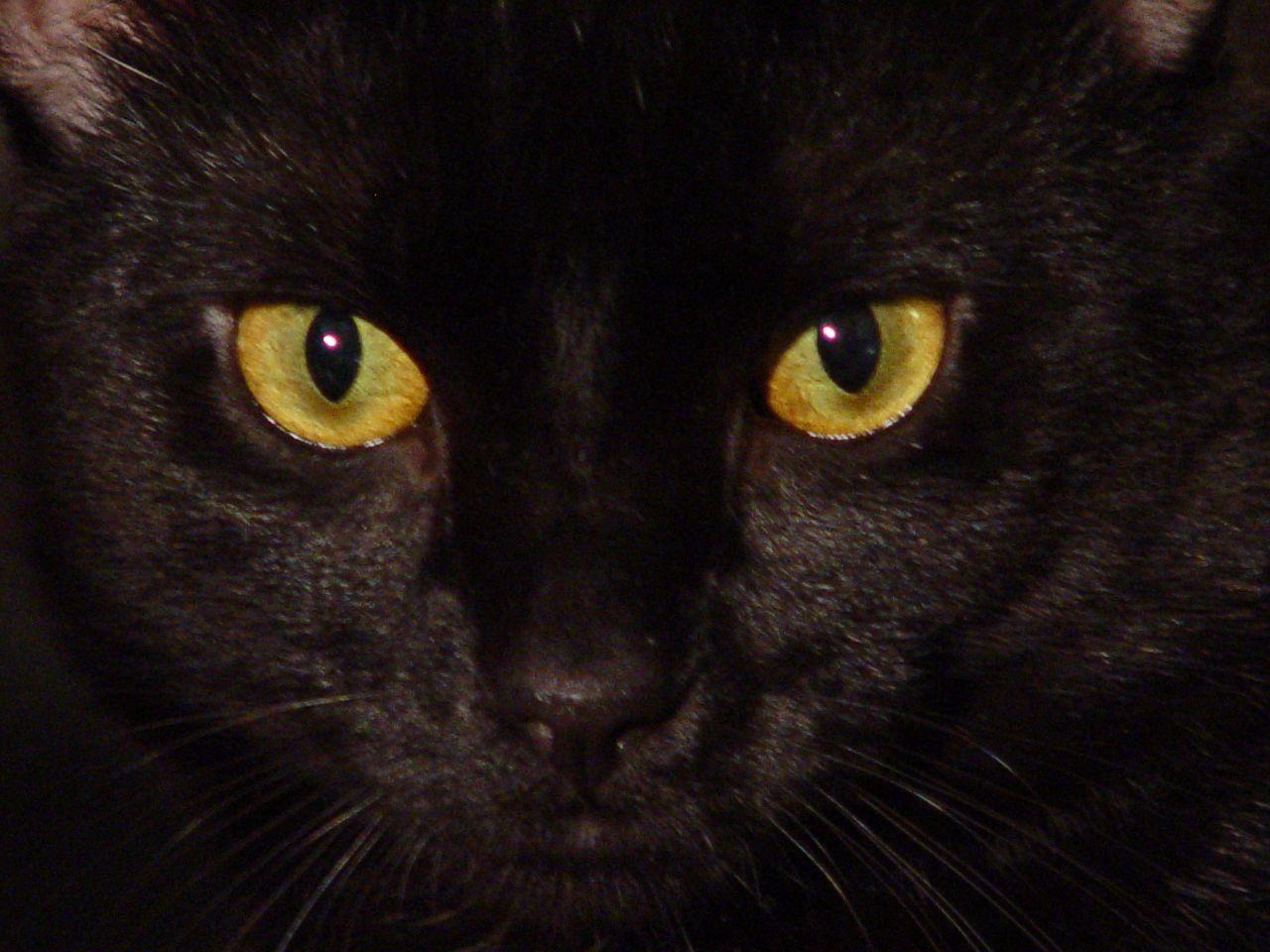 Зелено-желтый кот