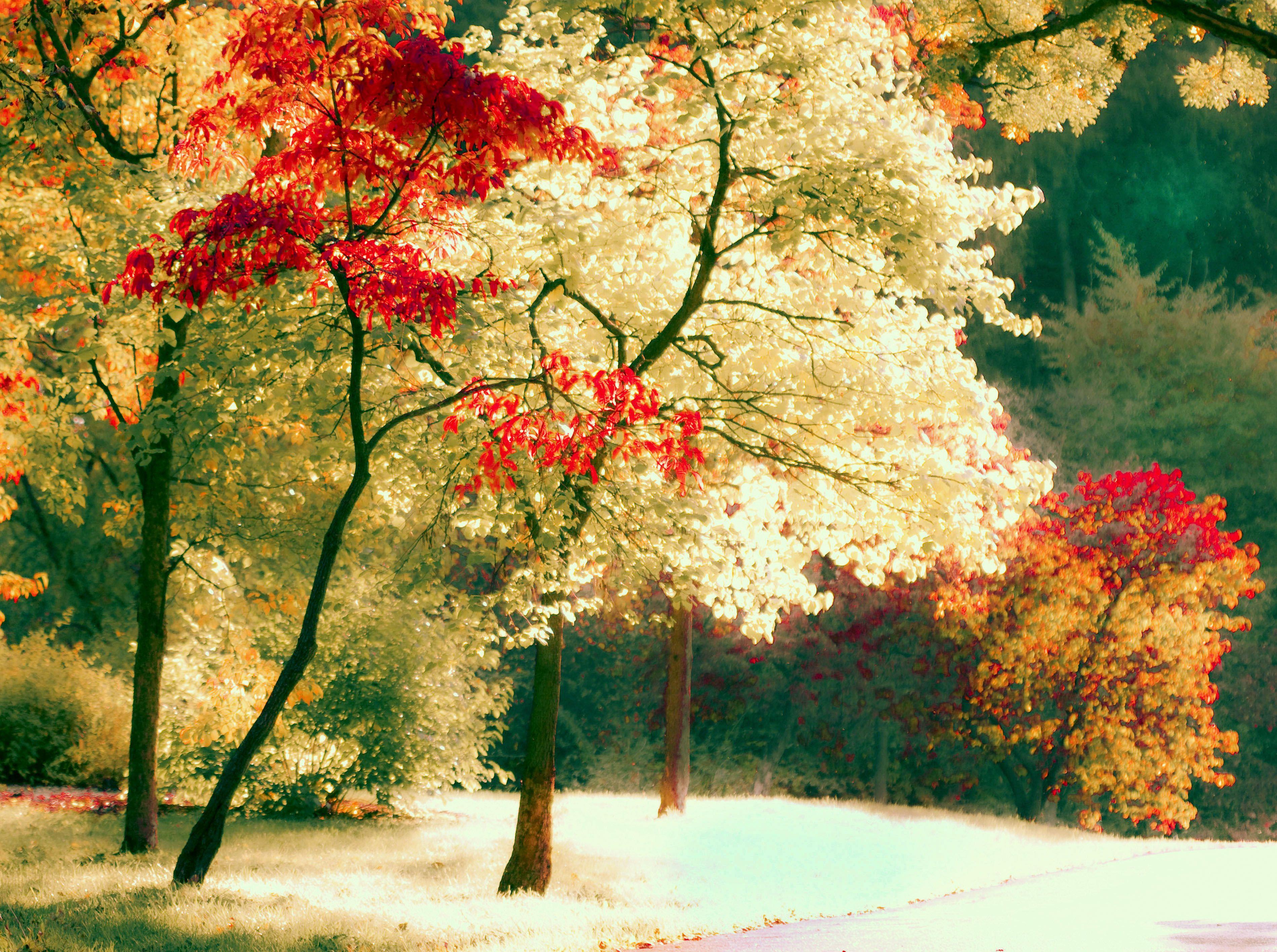 Free Best woodstock x HD Desktop Wallpapers and