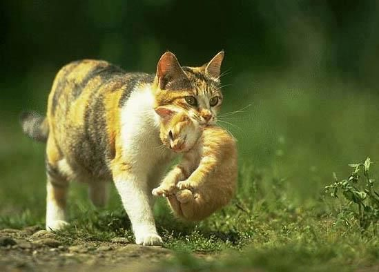 Mather Cares On Her Baby Cat Funny Cats Baby Animals Funny Kitten Photos