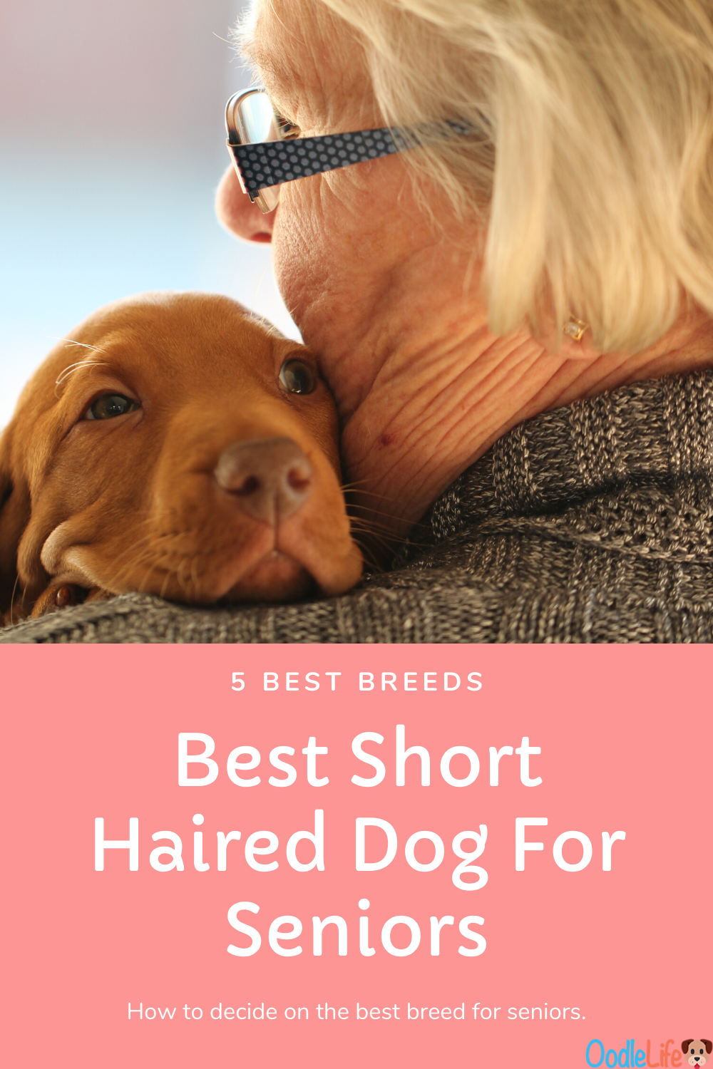 5 Best Small Short Haired Dog For Seniors Oodle Dogs In 2020 Short Haired Dogs Dog Breeds Medium Short Dog