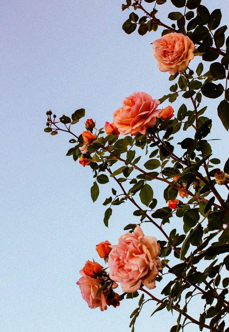 Fairytale Garden Spring Littlewonders Easy On The Eyes In 2019