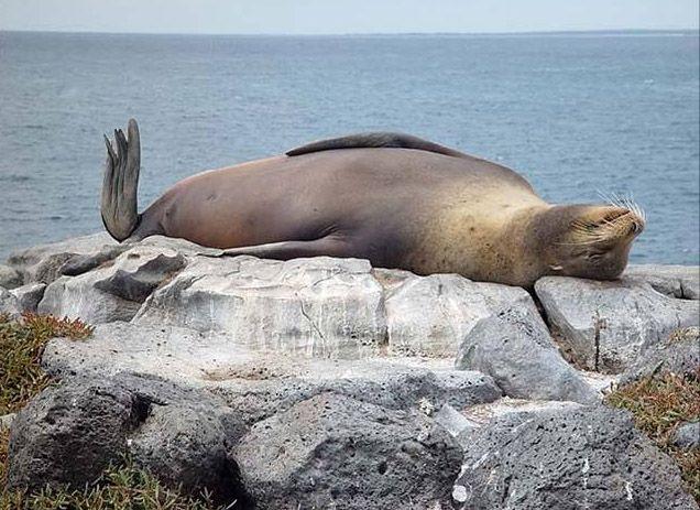 Fotos graciosas de un león marino | Sonrisas :-) | Pinterest ...