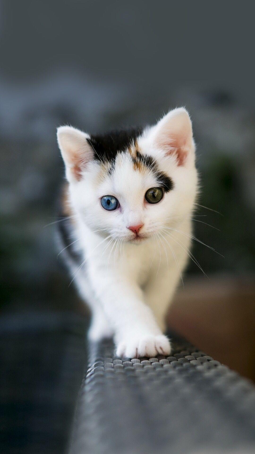 Kitty Cat Kittens Cutest Cute Cat Wallpaper Cute Cats