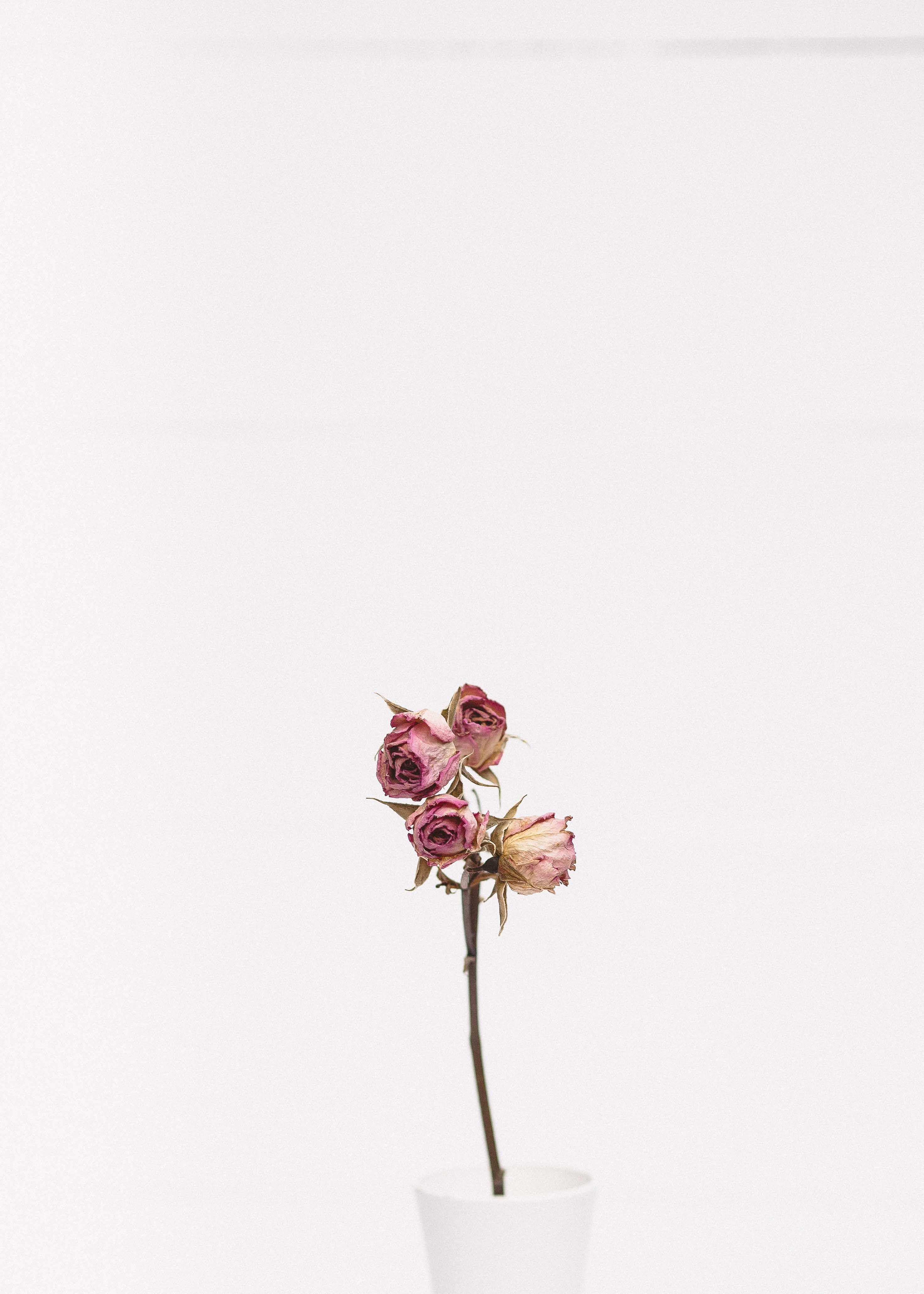 минималистичные картинки с цветами