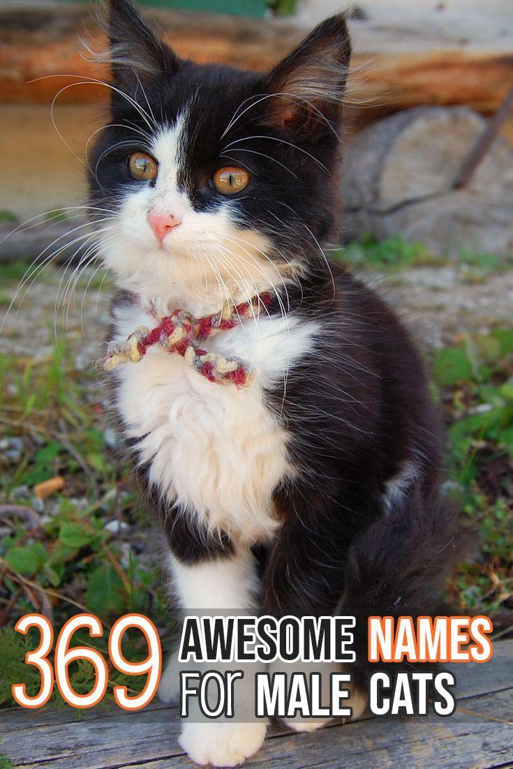 Fantastic names for your beautiful male kitten! Cute cat