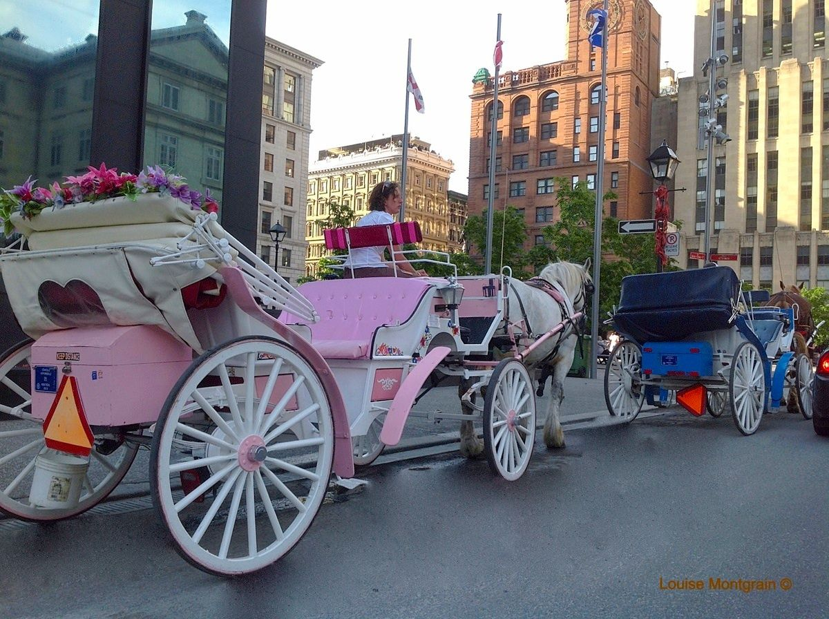 #Horse carriage #Montreal # Canada
