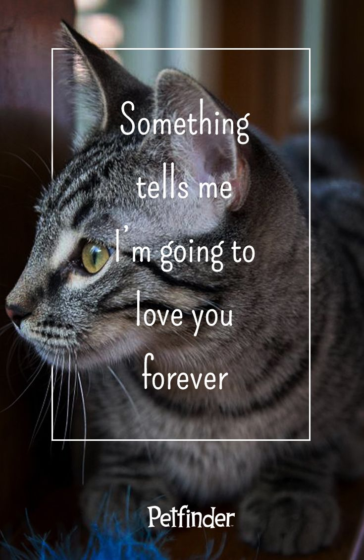 When You Know You Know Look For A Forever Friend Of Your Own On Petfinder Com With Images Cat Love Long Cat Cat Purr