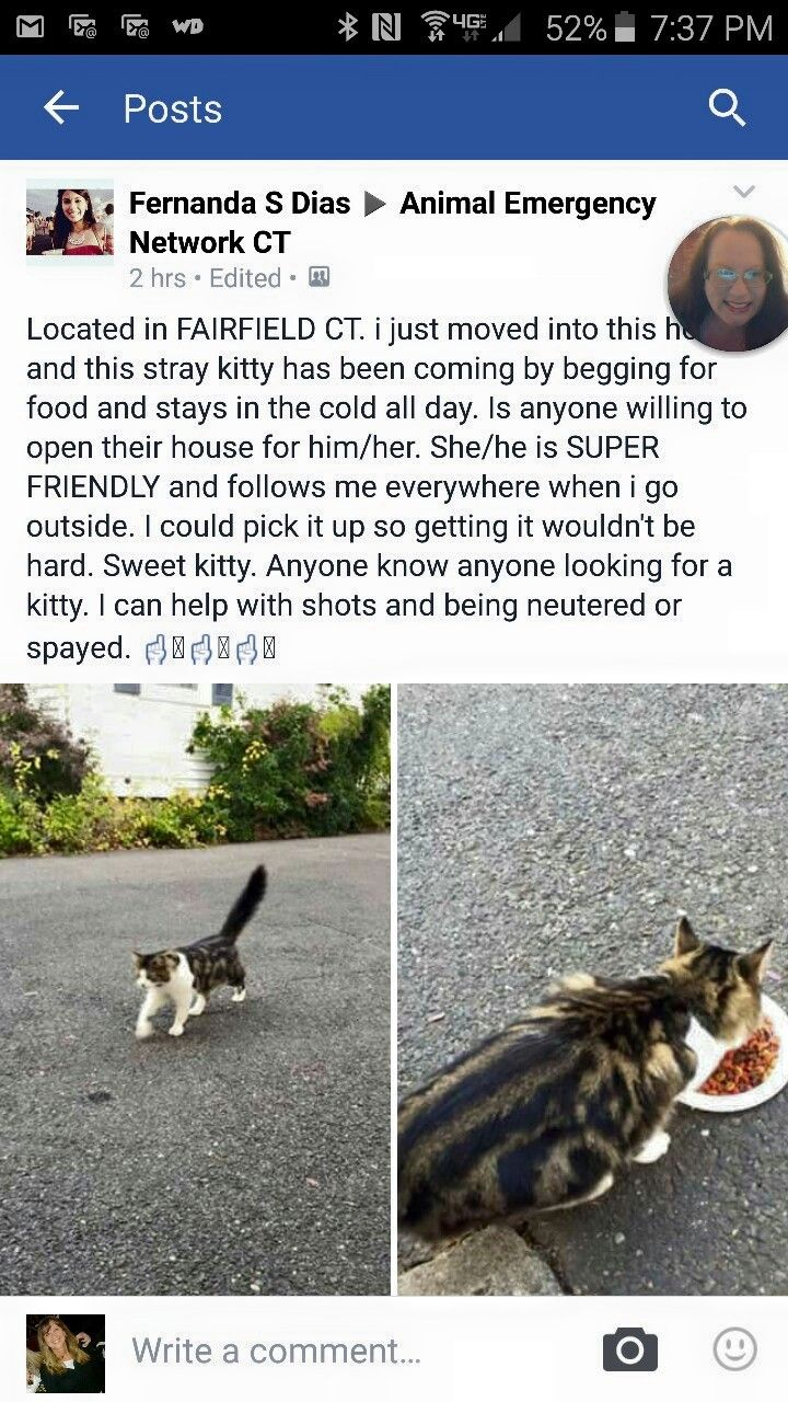 Pin On Found Cats Ct
